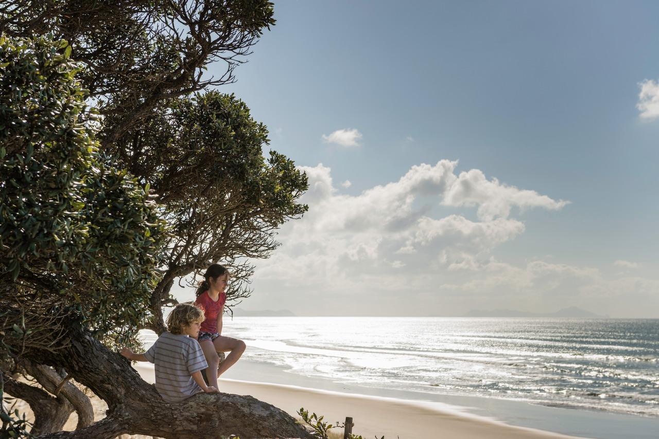kiwi kids in pohutakawa